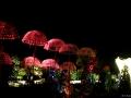 Parapluies nocturnes.jpg