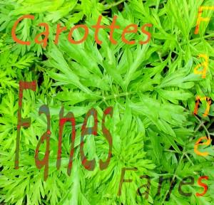 Fanes carotte