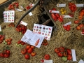 Exposition tomates
