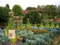 Jardin potager 2.jpg